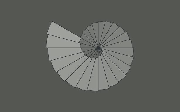 grey nautilus
