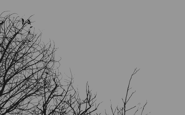 wallpaper trees grey